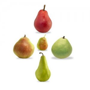 Mixed PEARS 5 varieties Pyrus BULK 100 seeds