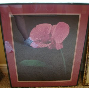 Framed Orchid Photo by Eric Popplewell