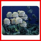 School of Collared Butterflyfish Thailand Fish Mouse Pad MousePad Mat 114