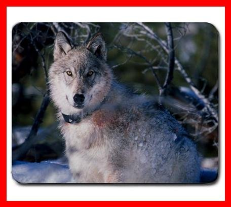Grey Wolf Wildlife Animal Mouse Mouse Pad MousePad Mat 196