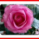 Pink Rose Flower Hobby Fun Mouse Mouse Pad MousePad Mat 211