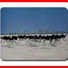 Ostrich Ostriches Bird Animal Mouse Pad MousePad Mat 224