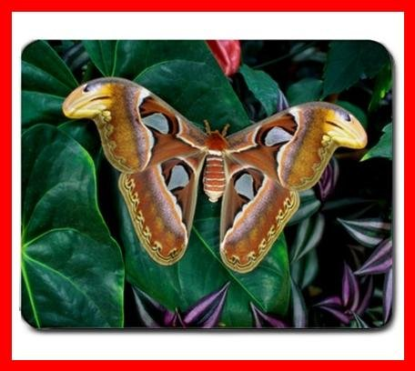 Rare Butterfly Hobby Fly Insect Mouse Pad MousePad Mat 231
