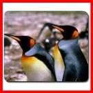 King Penguins Bird Hobby Mouse Pad MousePad Mat 248