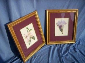 Floral Print - Burgandy Print