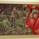 Flamingo Picture/Photo Frame 9271