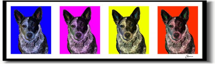 Original Pop Art Australian Cattle Dog Huge Panoramic Print