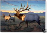 Elk Oil Painting on Canvas   (22232563154)