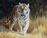 Tiger Royale Oil Painting on Canvas   (22232267673)