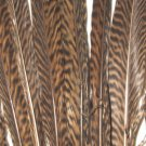 "Golden Pheasant Barred Tail Feathers 10-12"" Pkt of 100"