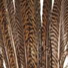"Golden Pheasant Barred Tail Feathers 8-10 "" Pkt of 100"