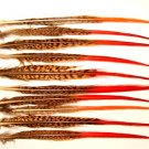 "Golden Pheasant Red Tip Feathers 10-12"" Long Pkt of 100"