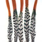 "Pheasant Feathers Lady Amherst  Red tip 10-12"" Pkt of 5"