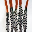 "Pheasant Feathers Lady Amherst  Red tip 8-10"" Pkt of 5"