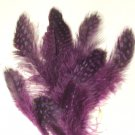 Spotted Guinea hen feathers 1/4 oz packet Body Plummage Purple