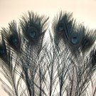 "100 Peacock Eye Feathers BLACK 10-15"" L bleached & dyed"