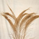 "50 Peacock Sword Feathers Bleached & Dyed GOLDEN BROWN 20-25"" L"