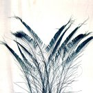 """50 Peacock Sword Feathers Bleached & Dyed BLACK 20-25"""" L"""