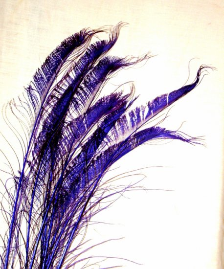 """50 Peacock Sword Feathers Bleached & dyed REGAL PURPLE  20-25"""" L"""