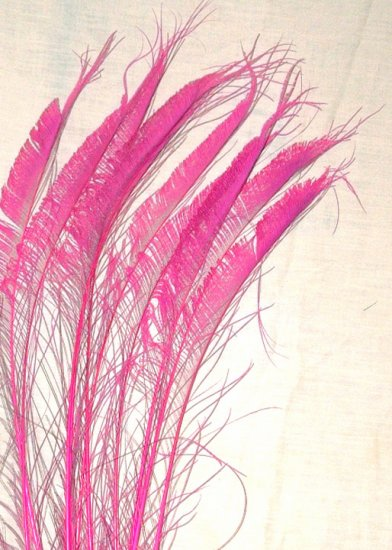 """50 Peacock Sword Feathers Bleached & Dyed HOT PINK  20-25"""" L"""