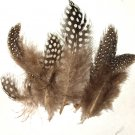 Spotted Guinea hen feathers 1/4 oz packet Body Plummage Natural
