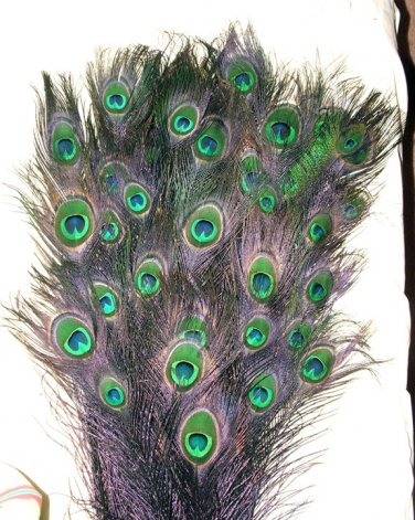 Peacock eye feathers Stem Dyed 100 BLACK L 30-35""