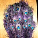 Peacock eye feathers Stem Dyed 100 REGAL PURPLE L 30-35&quot;