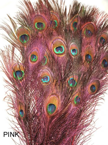 """Peacock eye feathers Stem Dyed 100 HOT PINK  L 30-35"""""""
