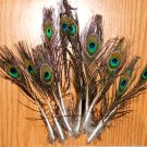 "100 Peacock Tiny Eye Feathers 4-10"" L Natural Iridescent"