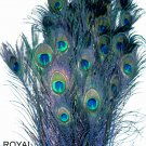 Peacock eye feathers Stem Dyed 100 ROYAL BLUE  L 30-35""