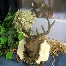 Cast Iron Elk Head Wall Hook