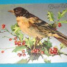 Bird and Holly German Postcard,embossed G11