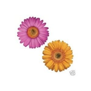"Nu Village for Kids ""Gerber Daisy"" Jumbo Appliques"