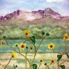 Valley Wildflowers matted print watercolor art Paula M