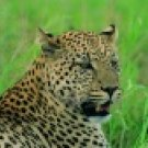 Botswana - Leopard Safari 10 days
