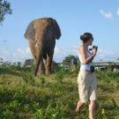 Ghana - Cultural and Wildlife Safari 9 days