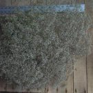 Dried Flowers-Baby's Breath - air - Single - Gypsophilia