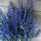Dried Flowers-Blue Salvia -
