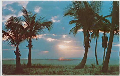 Florida Palm Trees at Sunrise Postcard Florida Natural Color #0057