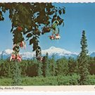 Mount McKinley, Alaska Postcard Summer View  Jean Petersen photo  #0407