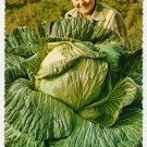 "44 Pound Cabbage Palmer, Matanuska Valley, Alaska Plastichrome Postcard ""alaska joe"" ORIGINAL #0411"