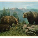 Grizzly Bears Postcard Glacier National Park Montana Plastichrome