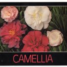 Camellia Varieties Postcard   Charles and Joann Jordan Photo