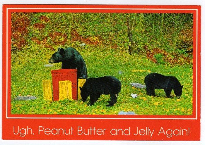 Black Bears Postcard Photo by Joyce L. Haynes