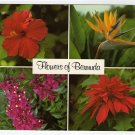 Flowers of Bermuda postcard  Red Hibiscus, Bird of Paradise, Bougainvillaea, Poinsettia  #0462