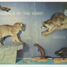 Animals of the Night Sugarlands Visitor Center Great Smoky Mountains National Park postcard TN