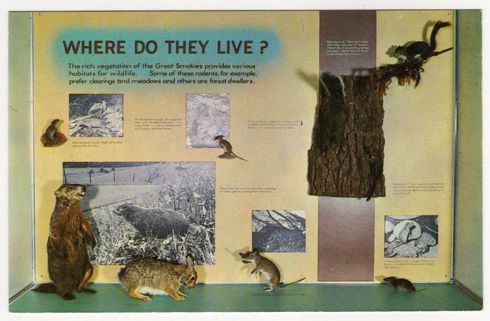 Where Do They Live? Sugarlands Visitor Center Great Smoky Mountains National Park postcard TN