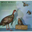 Wild Wings Exhibit Sugarlands Visitor Center Great Smoky Mountains National Park postcard Gatlinburg