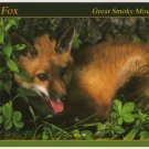 Red Fox - Animals of the Smokies - Great Smoky Mountains - APS Postcard  Photo Alan Carey