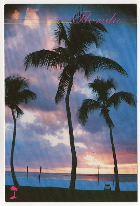 Sunset at a beautiful Florida beach Postcard Photo by Morris Fostoff FL palm trees volleyball #0529